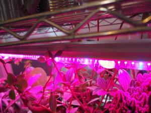 植物育成ライト