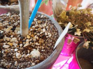 観葉植物 土 置き肥