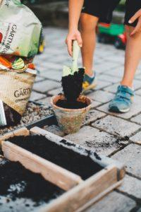植え替える鉢の大きさは