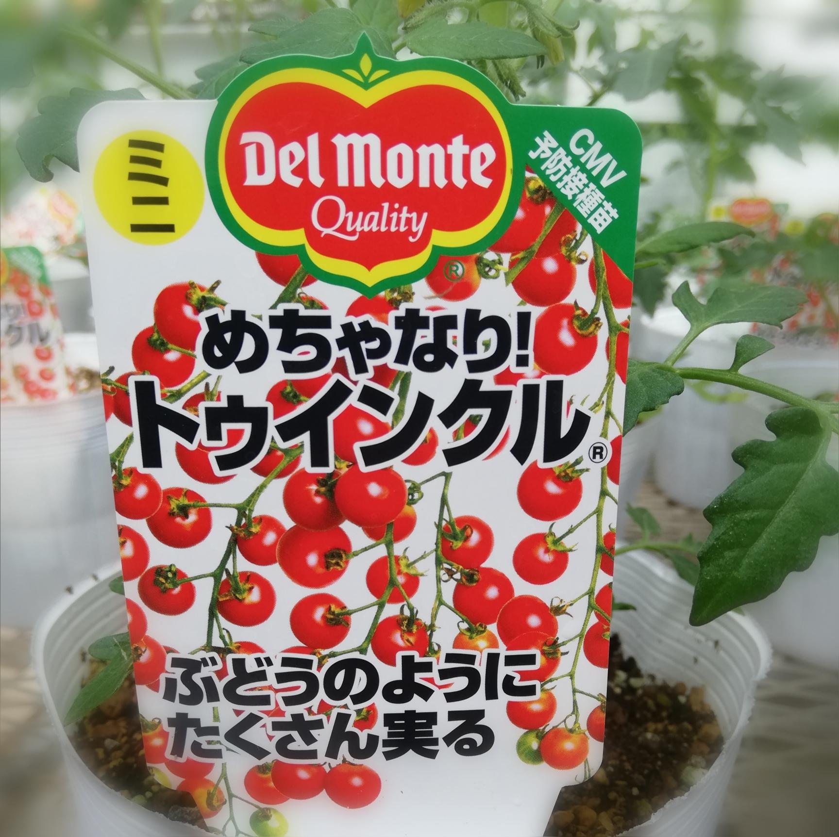 デルモンテ トマト苗